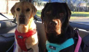 The Best Dog Car Harness 2019
