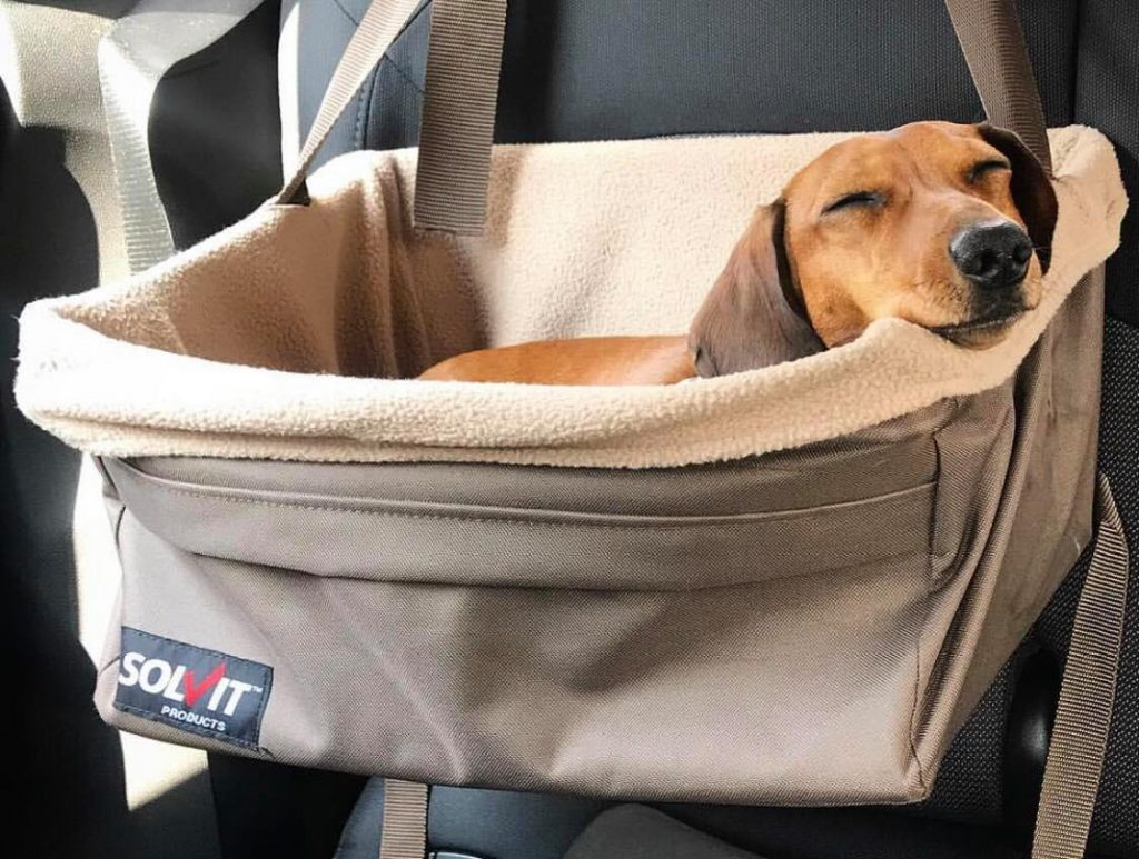 best small dog car seat